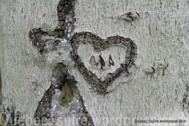 Coeur taillé sur un arbre dans la forêt du mont St Hilaire