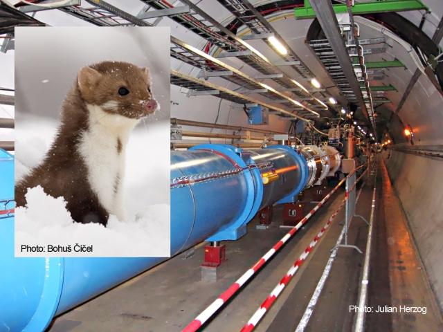 fouine CERN Franck Billaud, Québec Inspire Inspiration